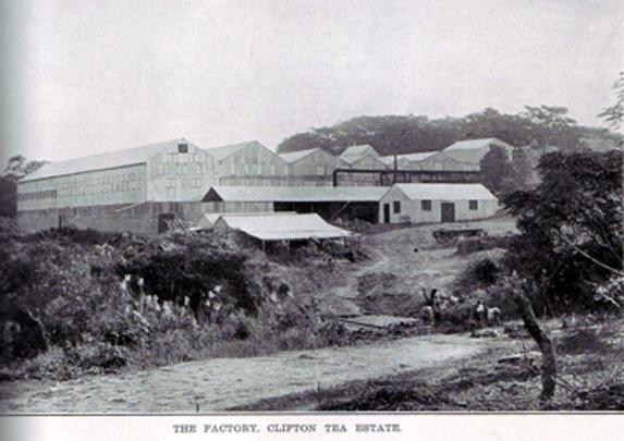 clifton tea factory