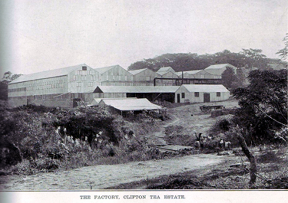 clifton tea factory